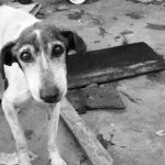 perro-abandonado_0