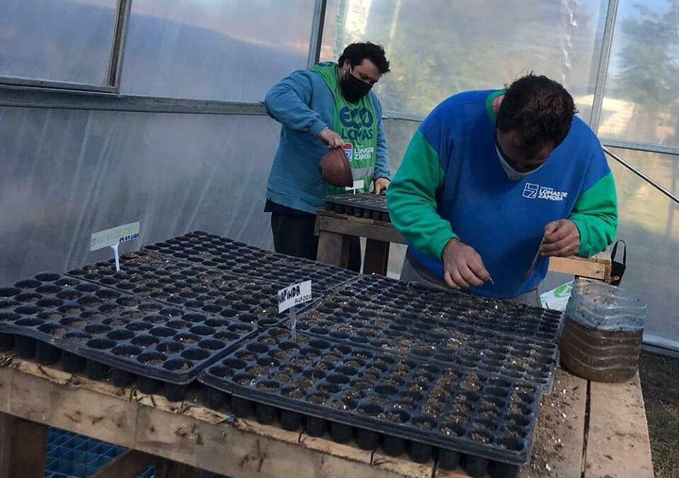 PREPARAN PLANTAS PARA PLANTAR EN PARQUES Y PLAZAS